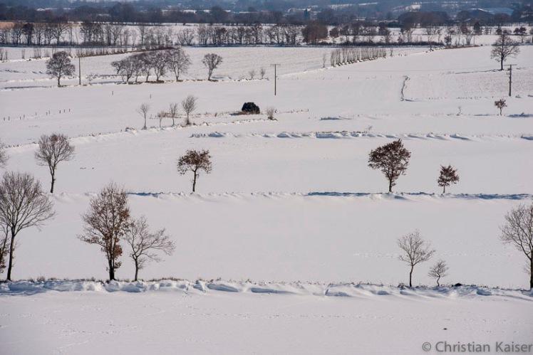 Knicks im Winter