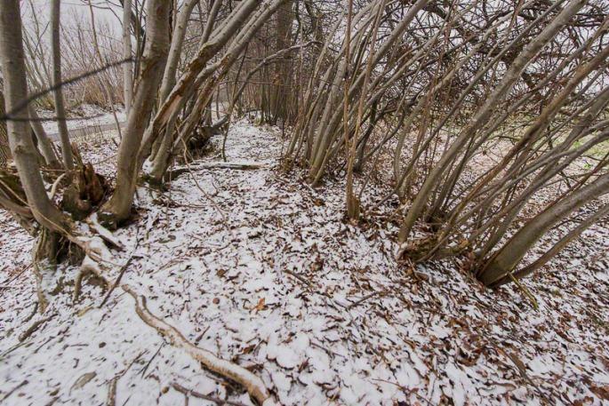 Blick auf den Knickwall im Winter