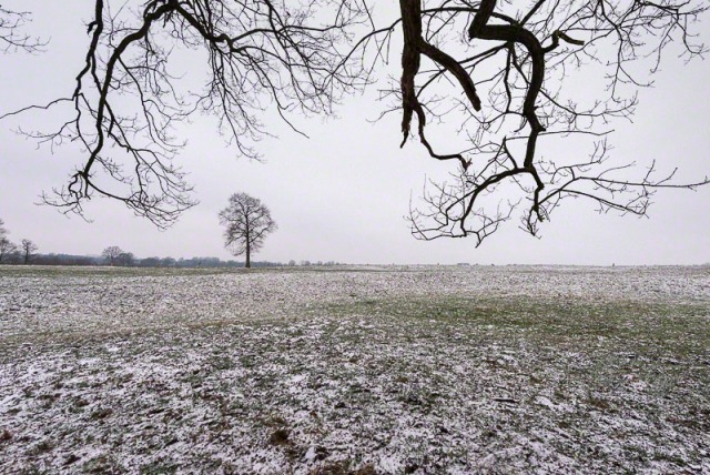 first snow on the meadow