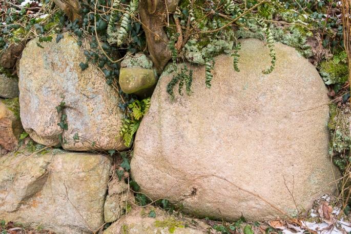 Findlinge vom Feld gesammelt bilden den Sockel des Knickwalls