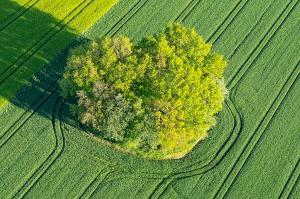 Baum und Feld aus der Vogelperspektive