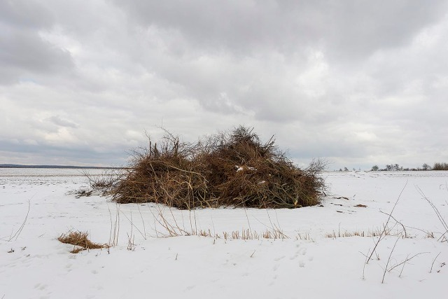 Knickholz in Dithmarschen
