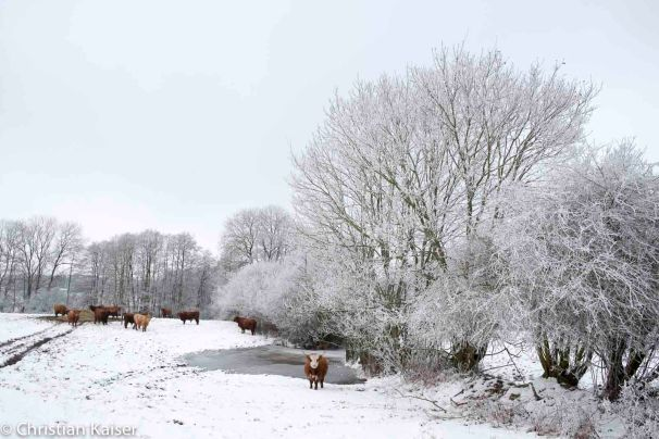 ck_knick-winter-0203.jpg