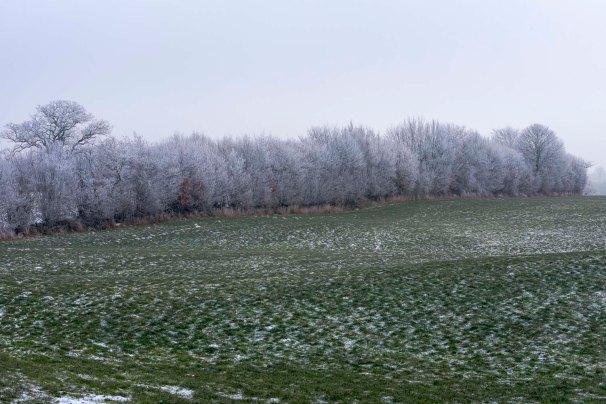Der nächtliche Frost legte Raureif wie Zuckerguss auf die Zweige des Knicks.