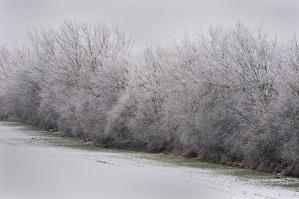 Rauhreif bei Wintereinbruch am Knick in Schleswig Holstein