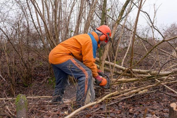Winterliche Arbeit im Knick des Kattendorfer Hofs