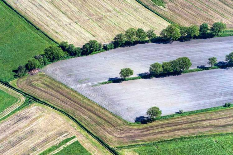 Aerial view on fields an hedges