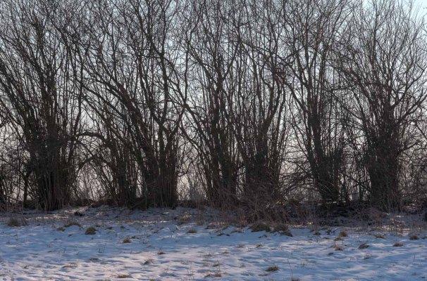 Winterliche Knicklandschaft mit Schnee