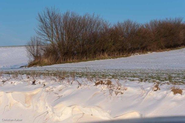 Winterlicher Knick auf verschneitem Feld zwischen Bujendorf und Gömnitz
