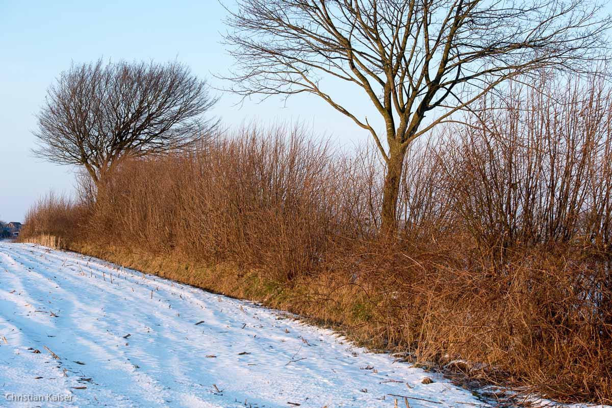 Winterliche Eiche auf verschneitem Feld bei Neustadt OH