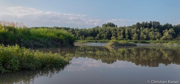 Flussaue in der unteren Elbe Niederelbe