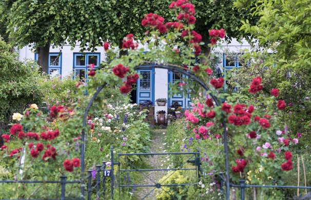 flowering roses in the garden of blankenese © Kaiser-Photo.com