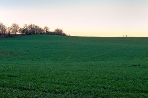 Auf großen Feldern wird zuviel gedüngt undgespritzt