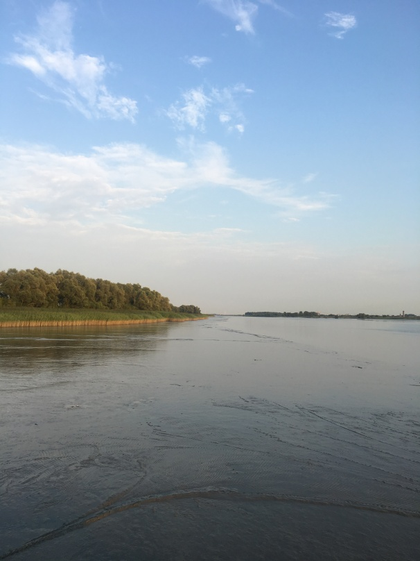 fresh water wadden in the elbe river