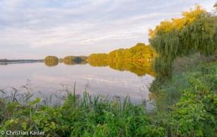 Knicks sind Feldgehoelzhecken oder Wallhecken in Norddeutschland
