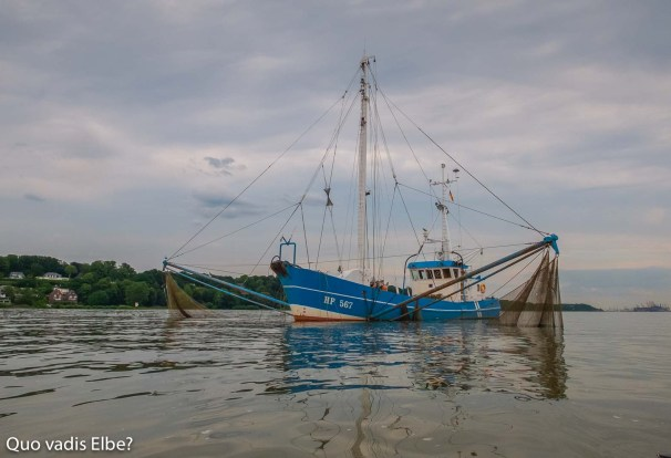Fischkutter HF 567 fischt vor dem Mühlenberg auf der Elbe