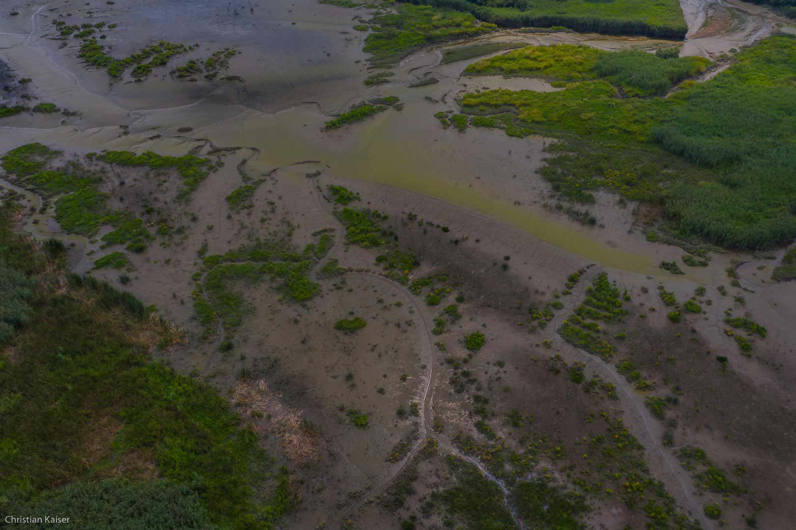 Suesswasserwatt, tidal area, Biotop, Ebbe, Niedrigwasser, Priele