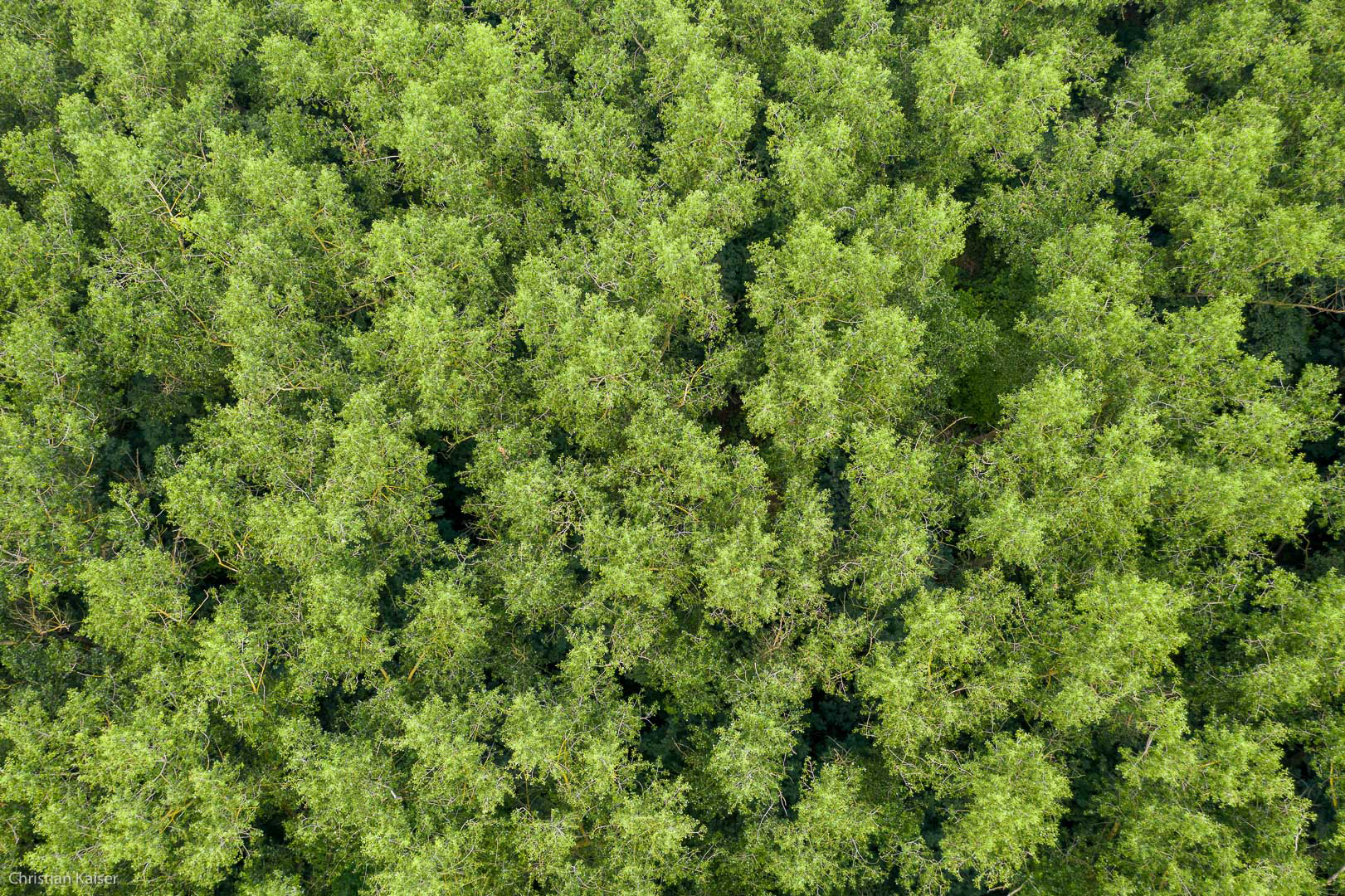a view from above on the roof of the green leaves of the forest