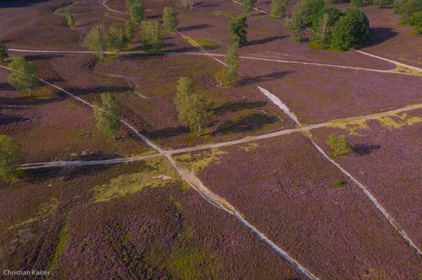 after the glacial period, Weichselian glacial, Heather-flower, Dunes.