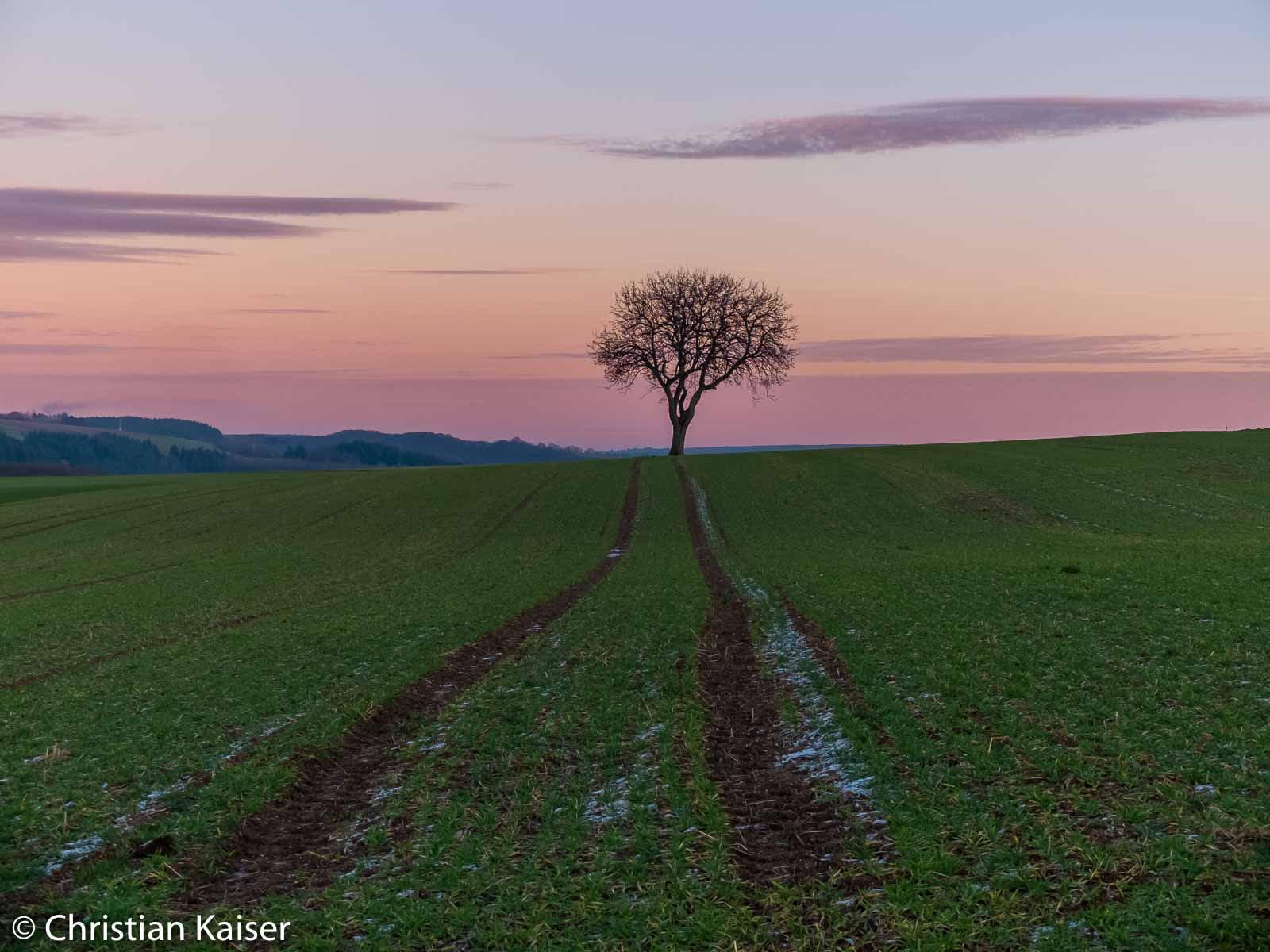 Einzelne alte Obstbäume auf den Feldern scheinen Reste von Streuobstwiesen zu sein