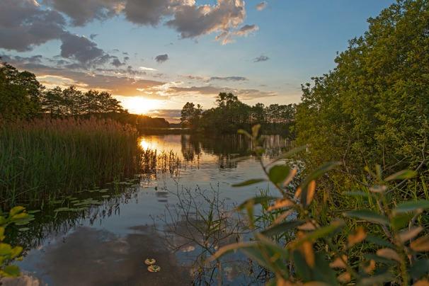 Erlen und Weiden am See im Biosphärenreservat Schaalsee
