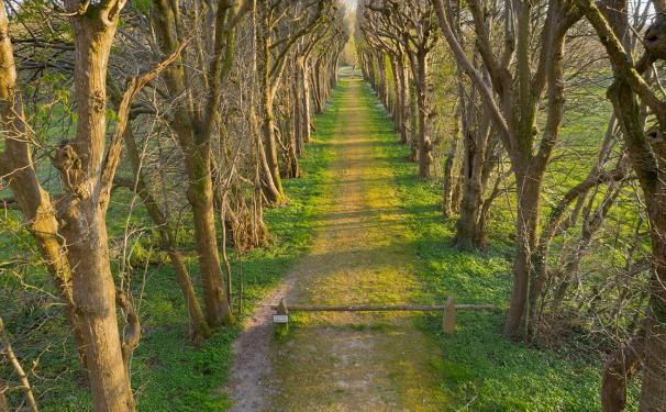 Linde, Baum, Natur, nature, trees
