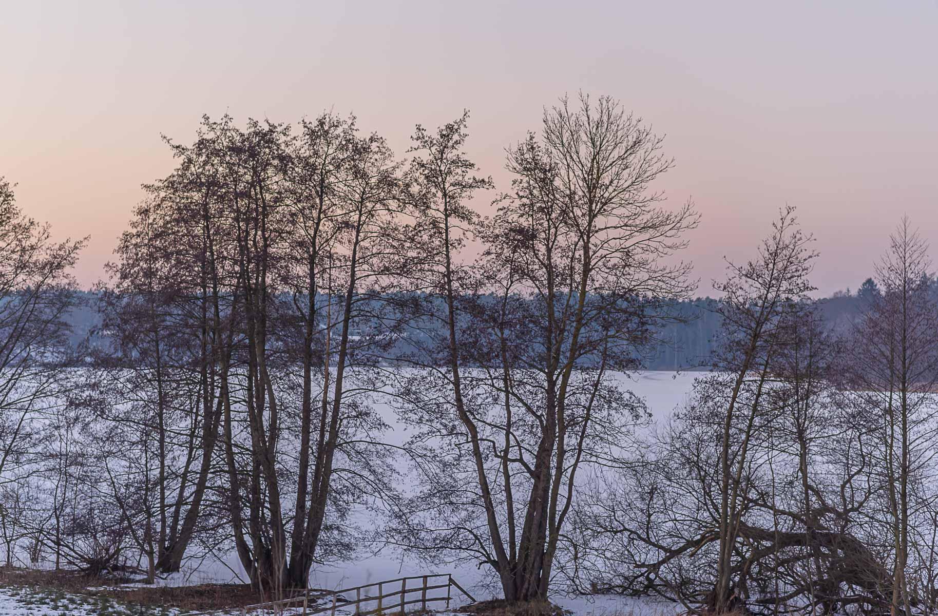 EIsdecke auf dem gefrorenen See -Erlen und Eschen am Ufer