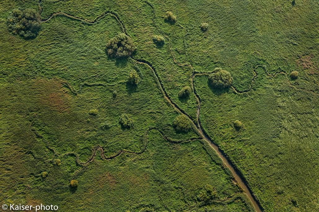 aerial image og reed belt